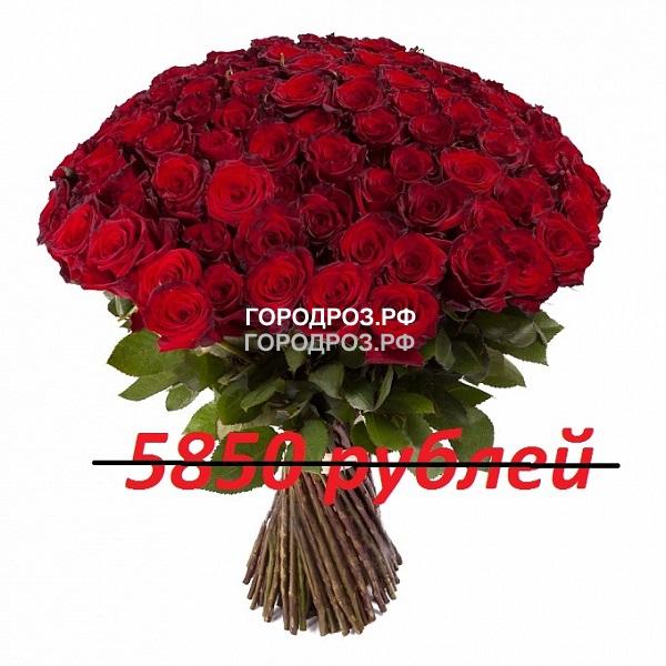 Букет из 65 красных роз
