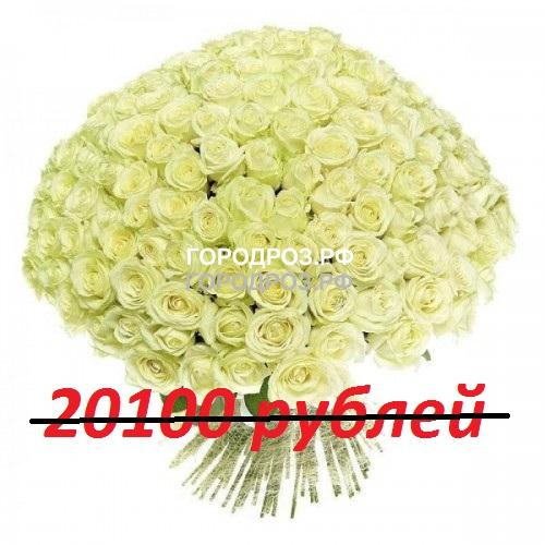Букет из 201 белой розы