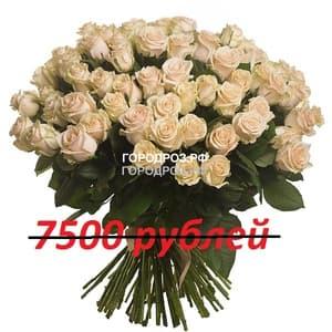 Букет из 75 нежно-розовых роз