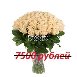 Букет из 75 кремовых роз
