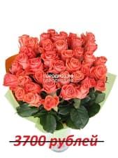 Букет из 37 коралловых роз