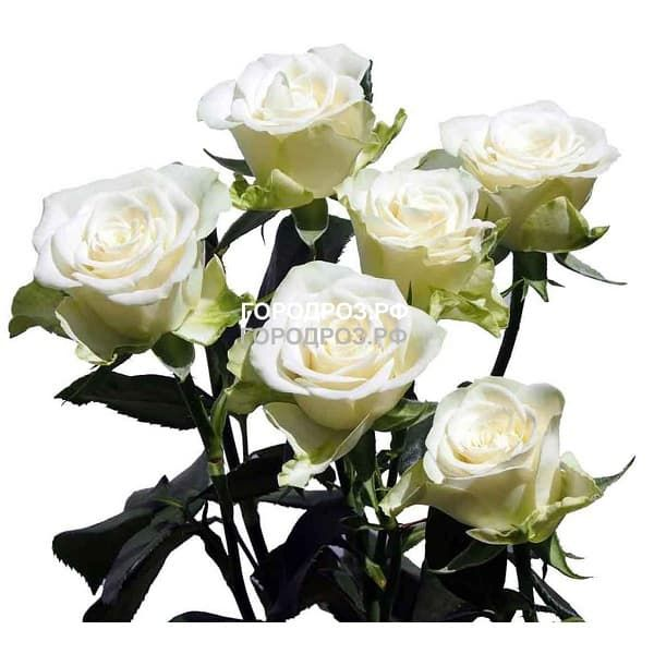 Белые Кустовые розы поштучно