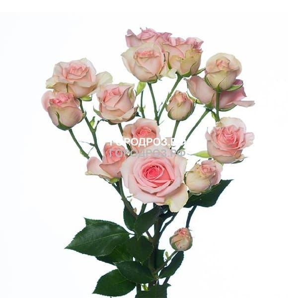 Розовые Кустовые розы поштучно