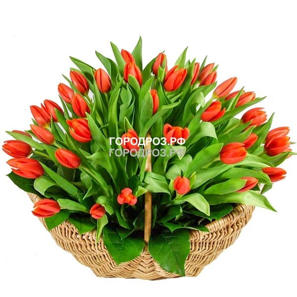 Средняя корзина красных тюльпанов