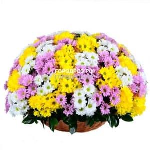Корзина с хризантемами кустовыми микс 1