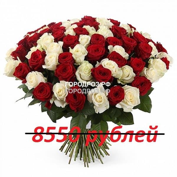 Букет из 95 красных и белых роз