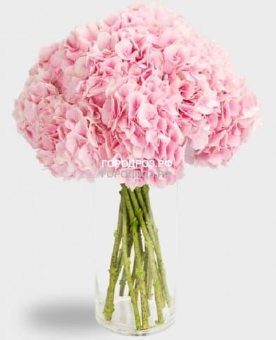 Букет из 9 розовых Гортензий