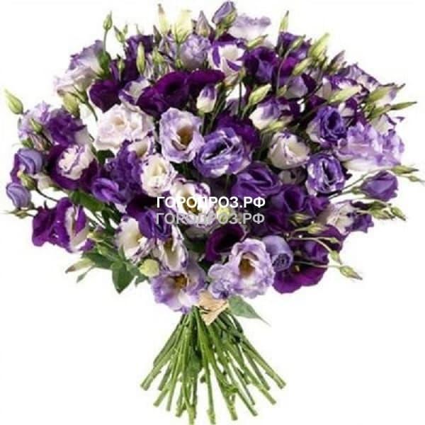 Букет из 101 фиолетовой Эустомы