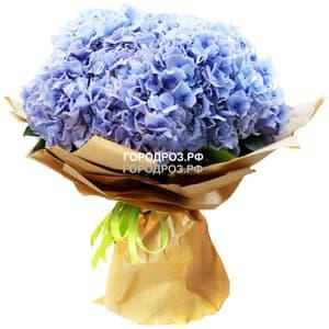 Букет из 15 голубых Гортензий