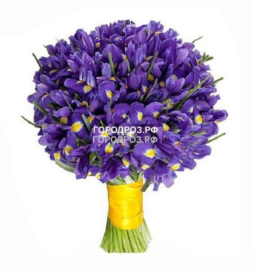 Букет из 51 фиолетового Ириса