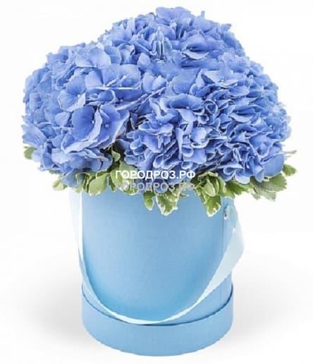 Голубые гортензии в шляпной коробке