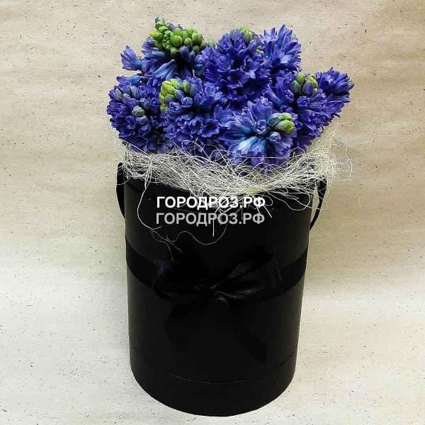Фиолетовые гиацинты в шляпной коробке