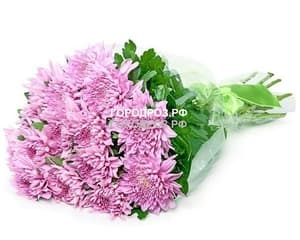 Букет из 19 розовых одноголовых хризантем