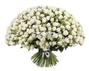 Букет из 101 белой кустовой розы