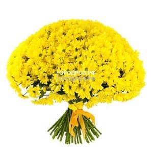 Букет из 51 желтой  кустовой хризантемы
