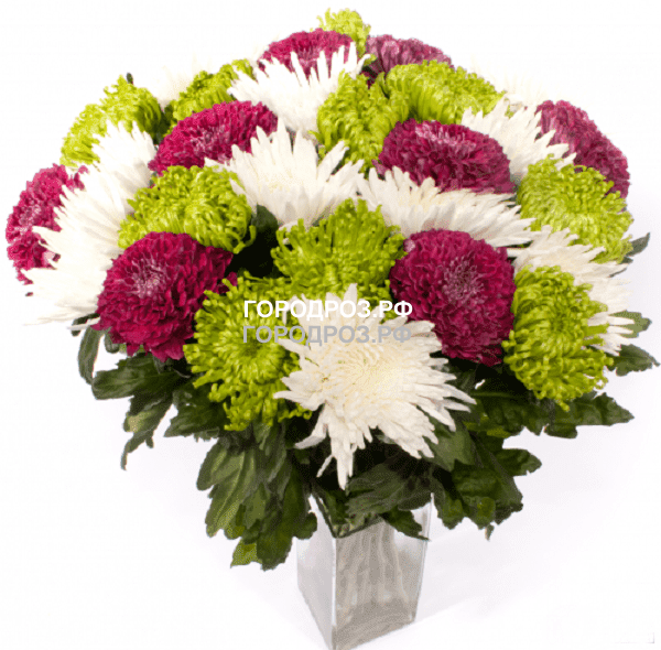 Букет из 35 одноголовых хризантем Микс Разноцвет
