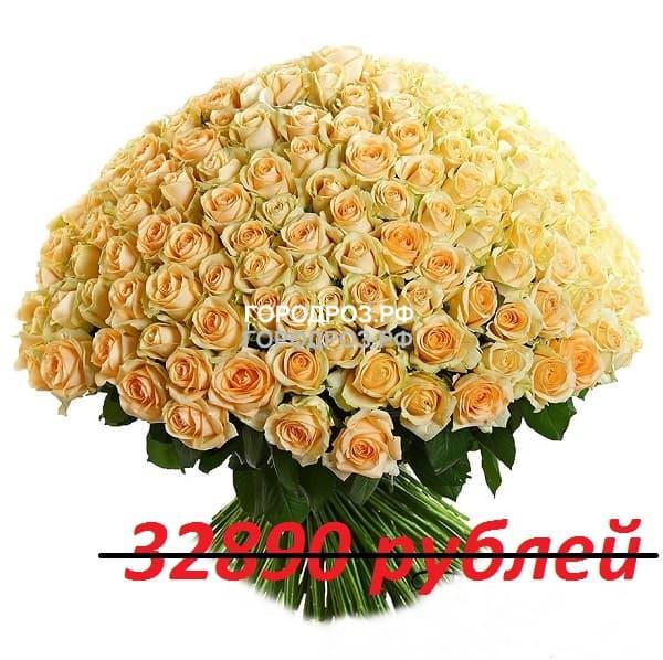 Букет из 301 кремовых роз