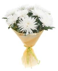 Букет из 9 белых одноголовых хризантем