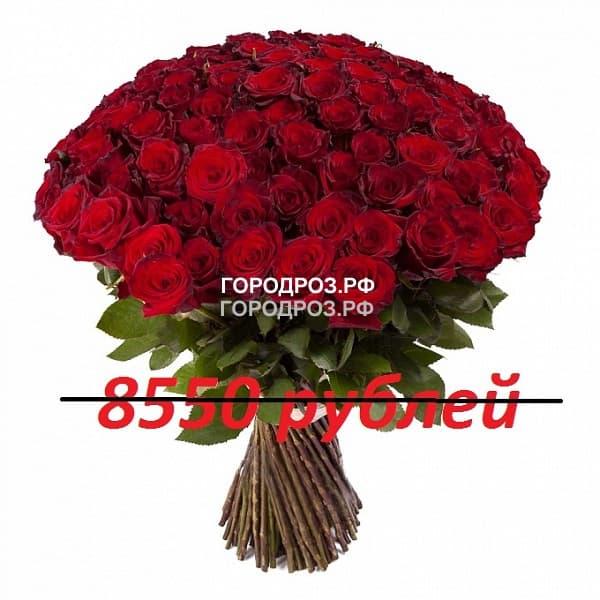 Букет из 95 красных роз