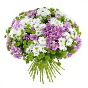 Букет из 51 кустовой хризантема Микс Разноцвет
