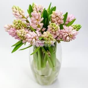 Букет из 9 розовых Гиацинтов
