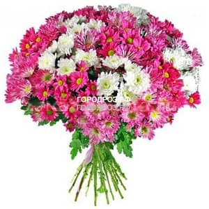 Букет из 35 розовых кустовых хризантем