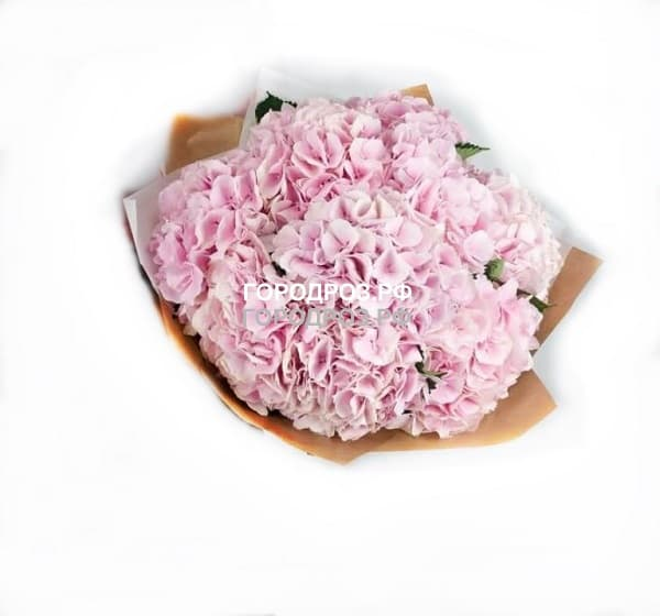 Букет из 11 розовых Гортензий