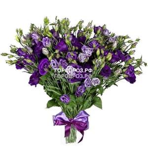 Букет из 35 фиолетовых Эустом