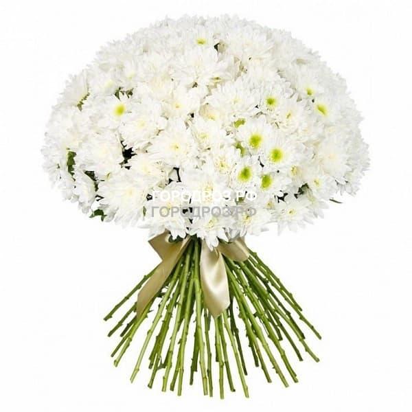 Букет из 51 белой кустовой хризантемы