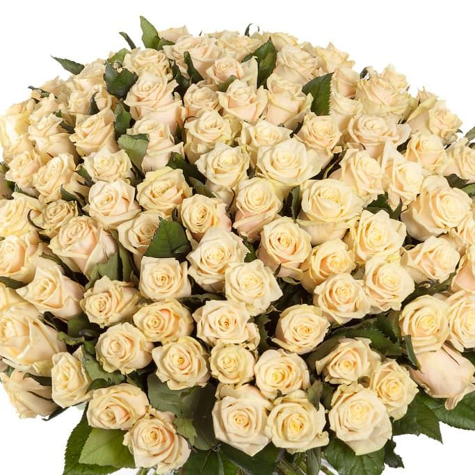 Букеты из 95 роз