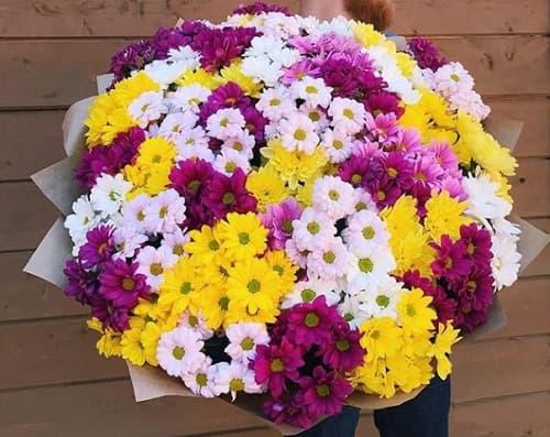 Хризантемы недорого под заказ в Москве, доставка бесплатно